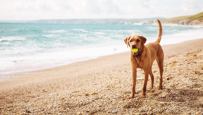 Dog-friendly beaches in Cornwall