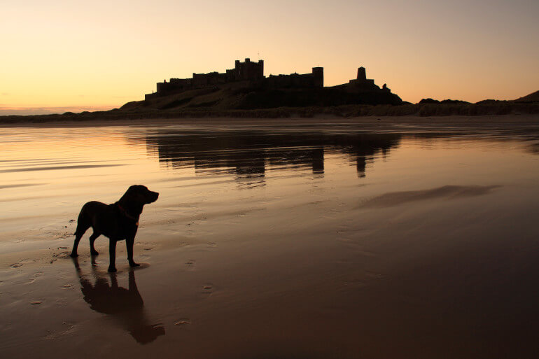 Dog-friendly beaches in Northumberland
