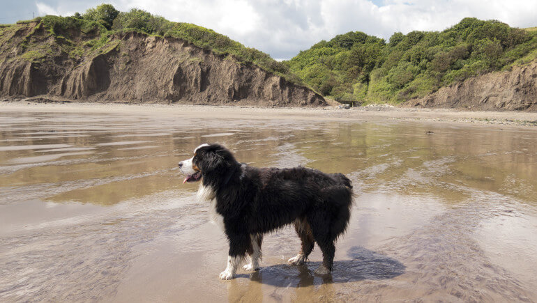 Dog-friendly beaches in Yorkshire