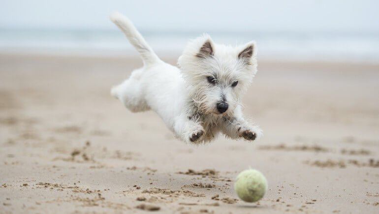 Dog-friendly beaches in Cumbria