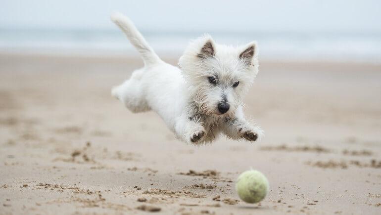Dog-friendly beaches in Cumbria