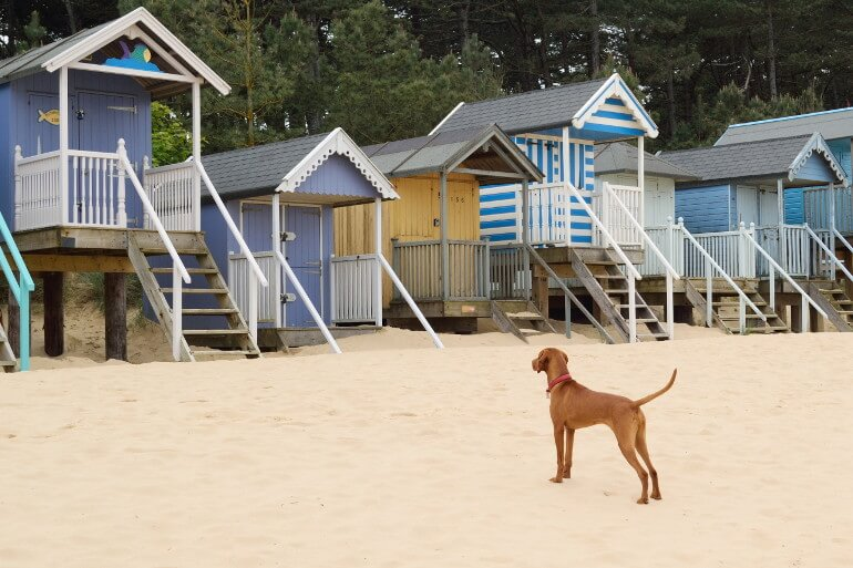 Dog-friendly beaches in Norfolk
