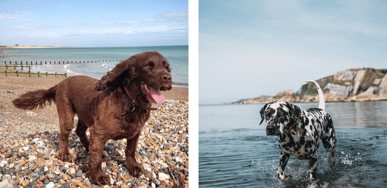 Dog-friendly beaches on the South Coast