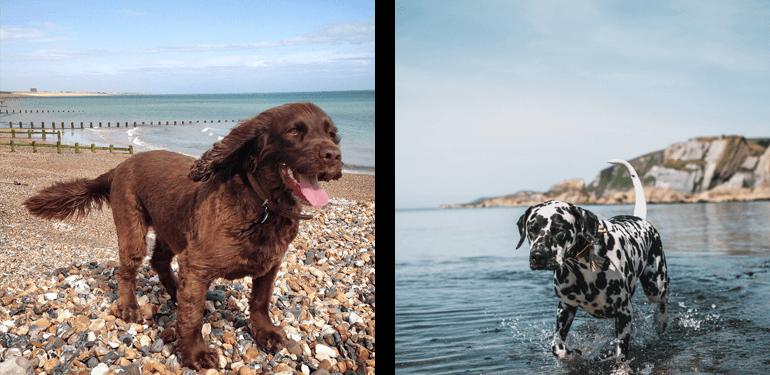 Dog-friendly beaches on the South Coast