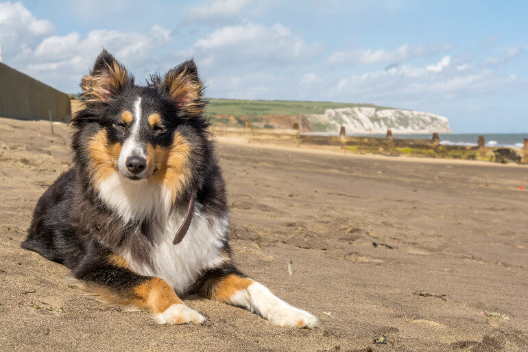 Dog-friendly beaches on the Isle of Wight
