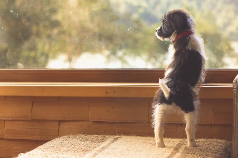 Northumberland dog-friendly cottages
