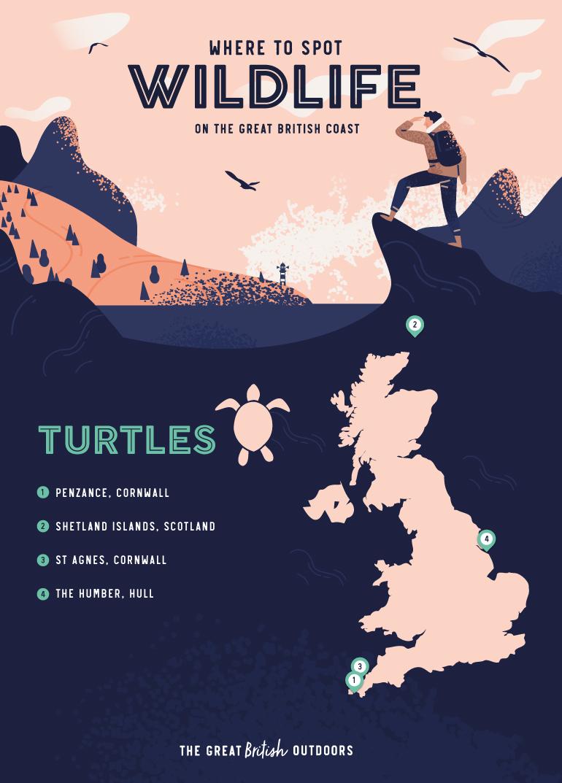 Turtles map