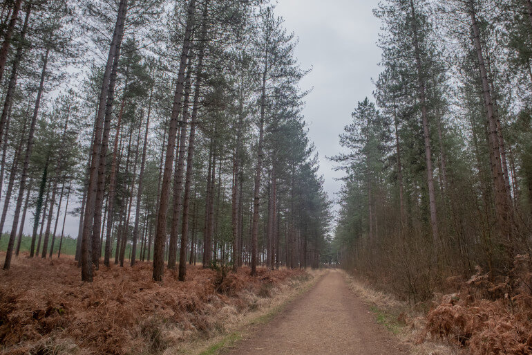 Ashurst to Lyndhurst Walk