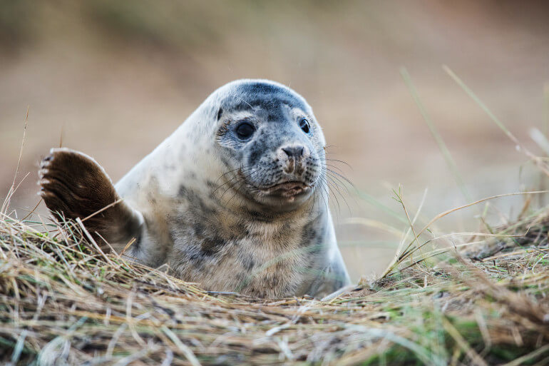 Seal in Scotland