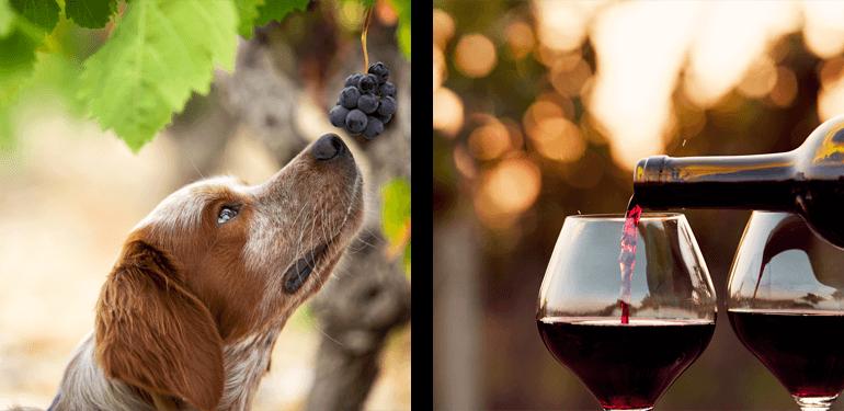 Yearlstone Vineyard