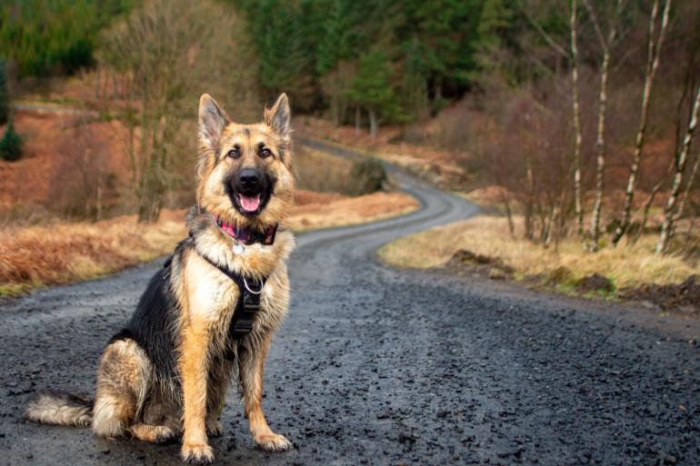 New Forest Dog-Friendly Guide 1