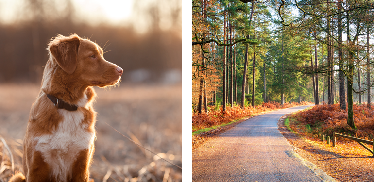 New Forest Dog-Friendly Guide 2