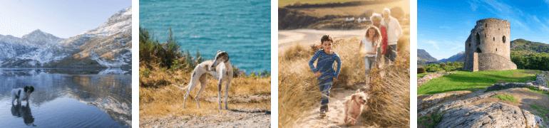 Dog-friendly Wales