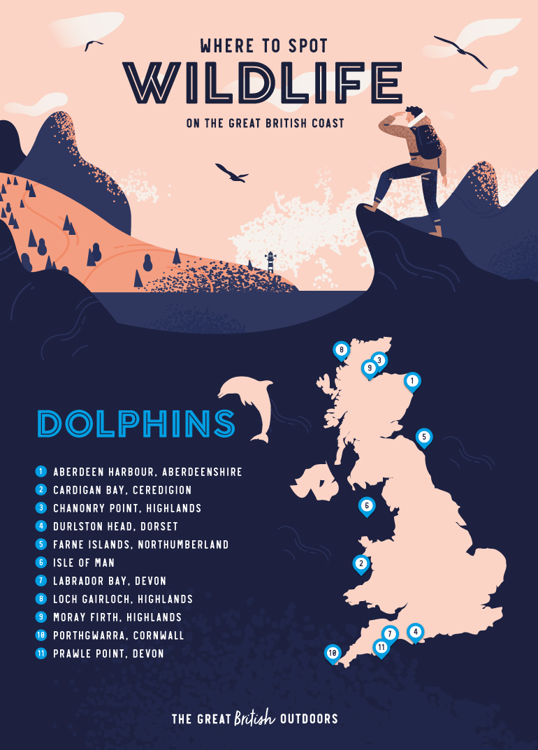Dolphins map