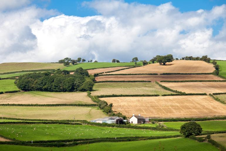 Green patchwork fields in the English countryside