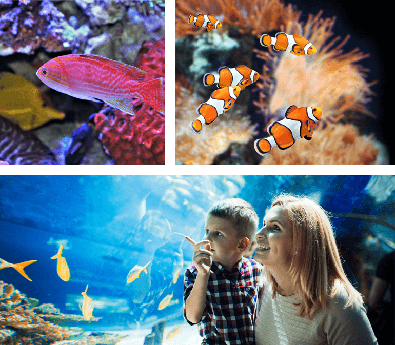 Visiting Sealife Brighton is one of our top rainy day activities in Sussex
