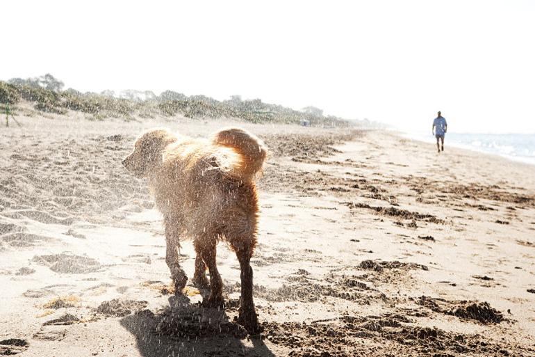 Dog-friendly beaches in Norfolk