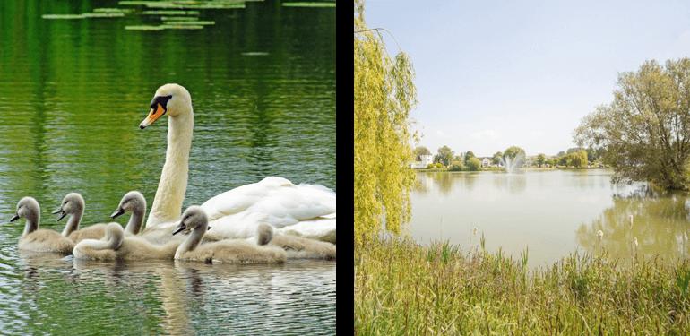 Isis Lake
