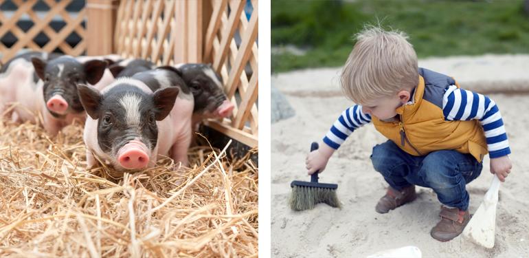 Take the kids to Lower Leas Coastal Park and Pepenbury Farm, Folkestone