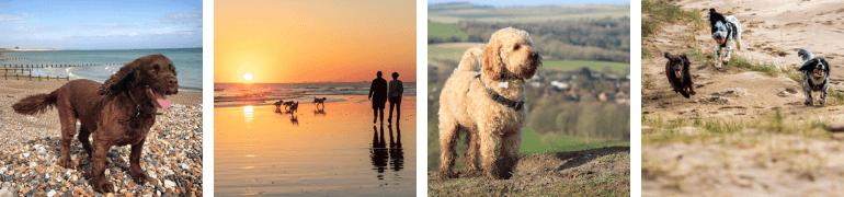 Dog-friendly Sussex
