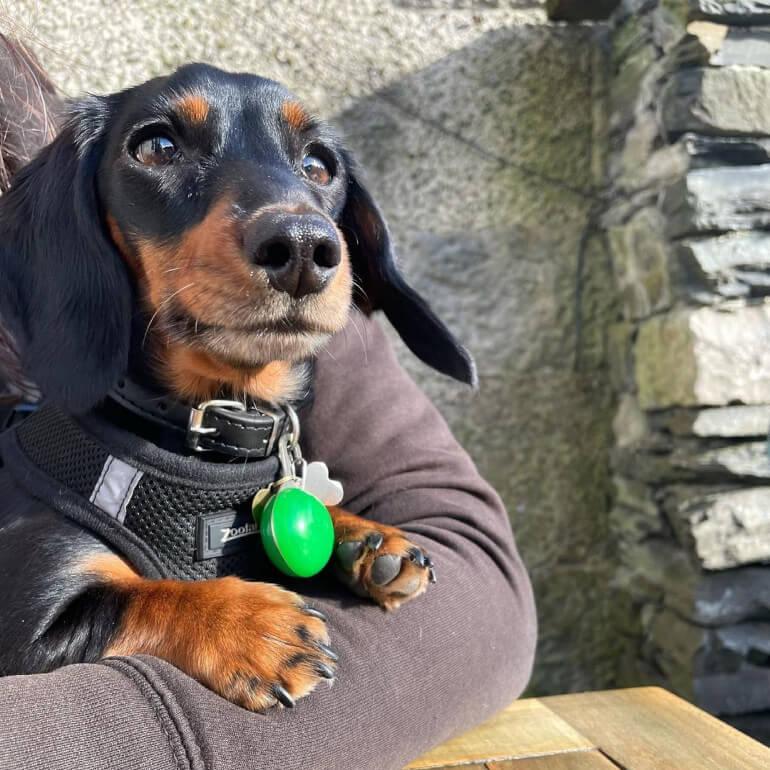 A beautiful pup enjoying The Queens pub