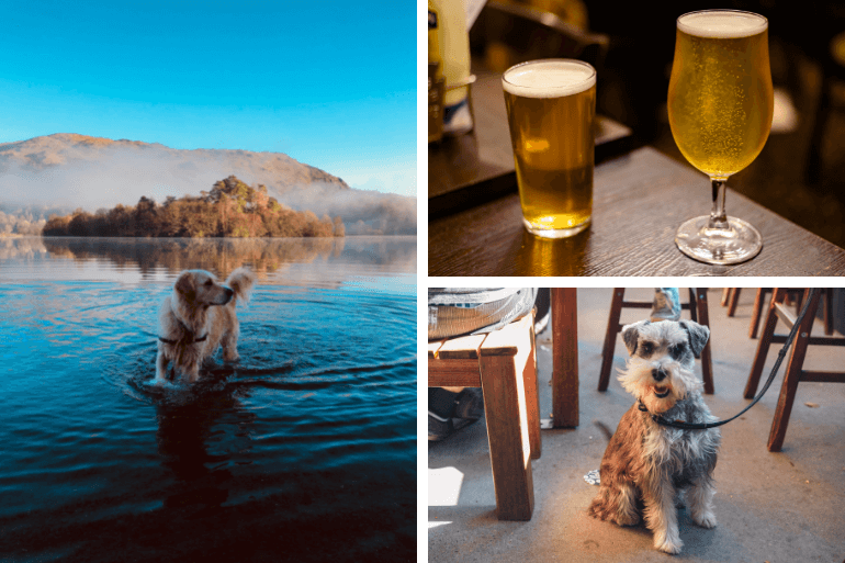 Dog in the water, dog in a pub and some nice pints of beer