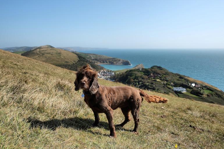 Dog-friendly pubs in Dorset