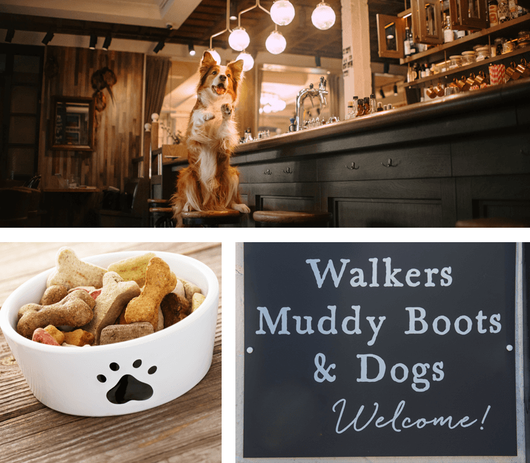 Dog-friendly pubs in the UK