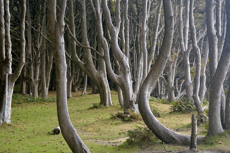 The woods on Brownsea Island – Dorset