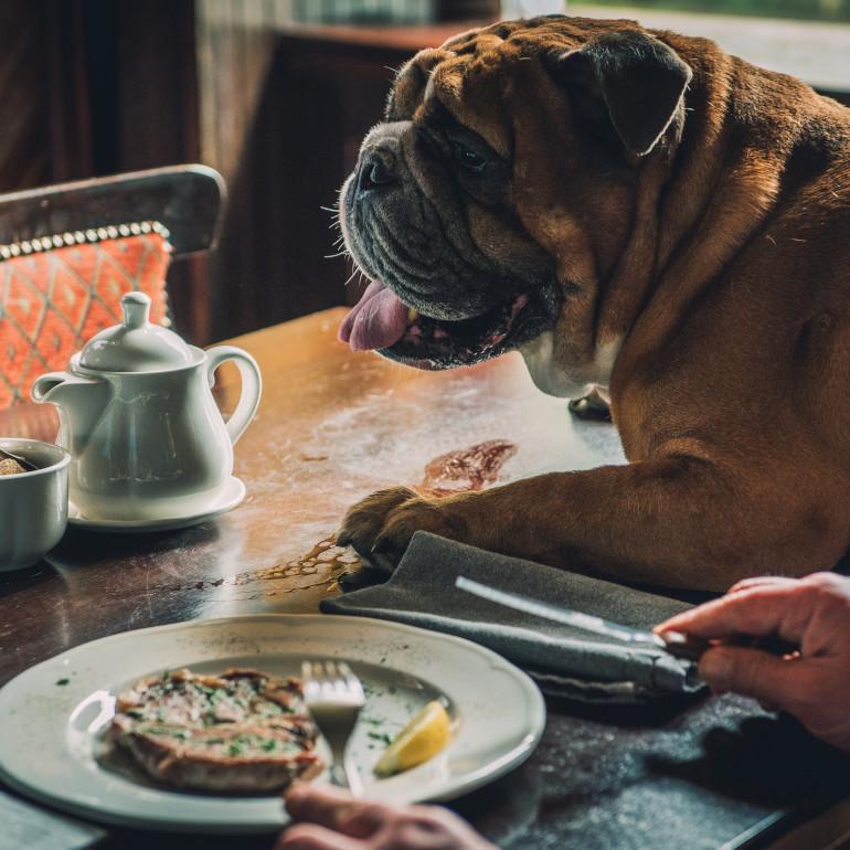 Dog-friendly Cornwall pubs