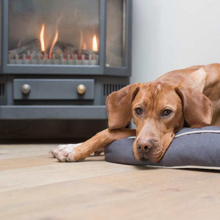 Dog-friendly cottages in Cornwall