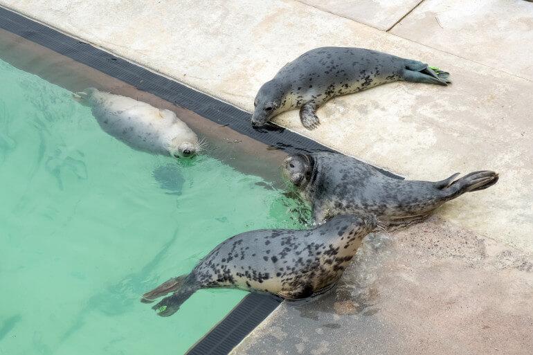 Gweek Seal Sanctuary