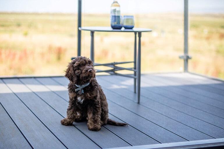 Devon dog-friendly cottages