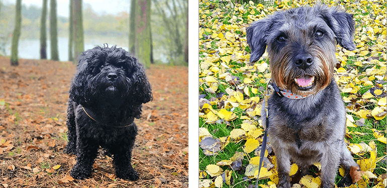 Two dogs in their respective favourite autumn places