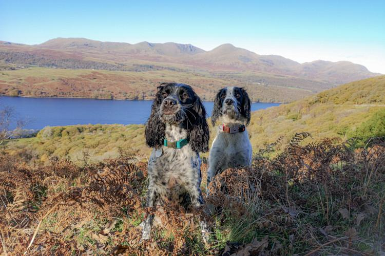 Willow and Bobby Lake District