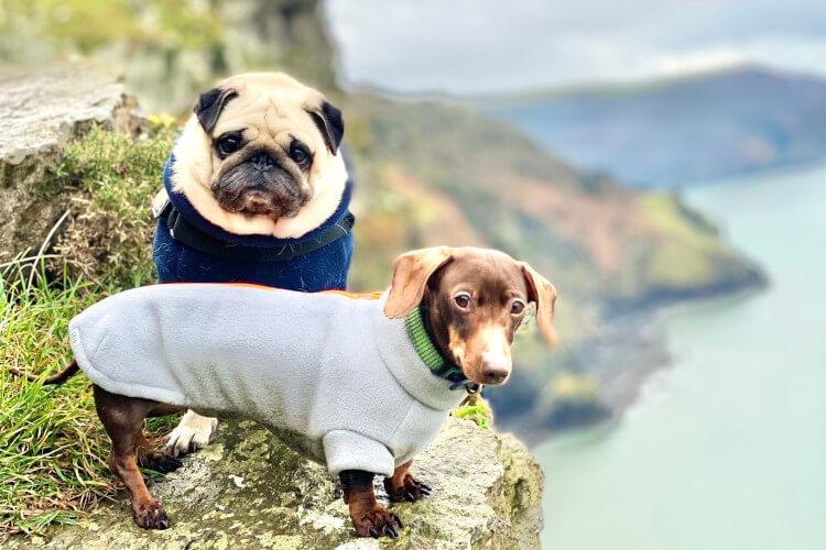 Puggy and Pops Devon cliff