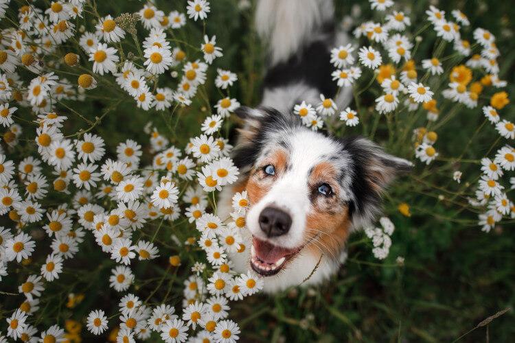 Dog in summer