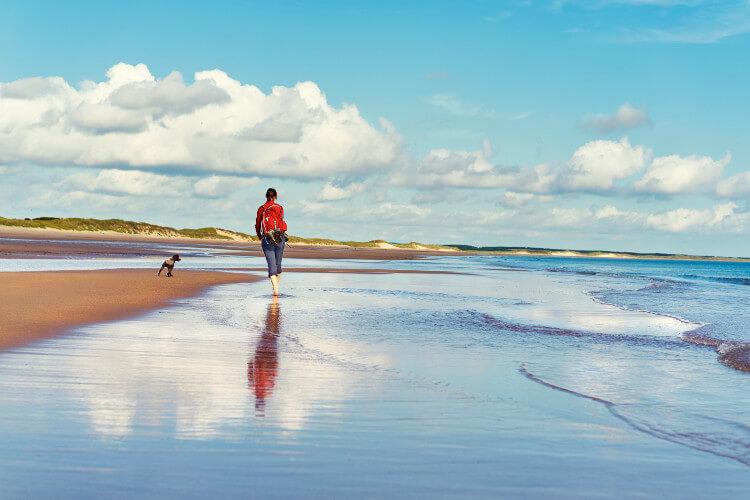 Dog-friendly holidays by the beach, Druridge Bay