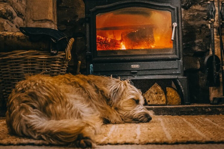Ronnie fast asleep in front of a wood burner