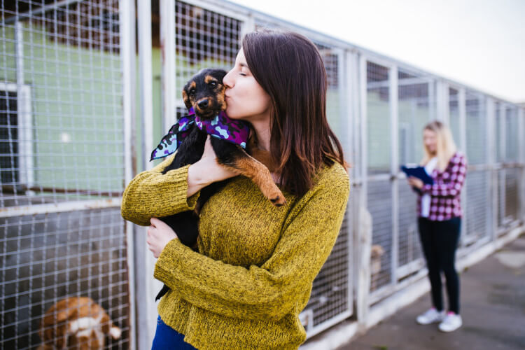 Dogs homes in the UK