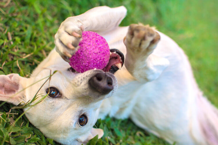 Donate toys to dogs homes