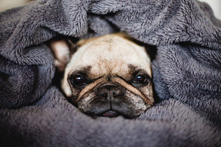 Donate blankets to dogs homes