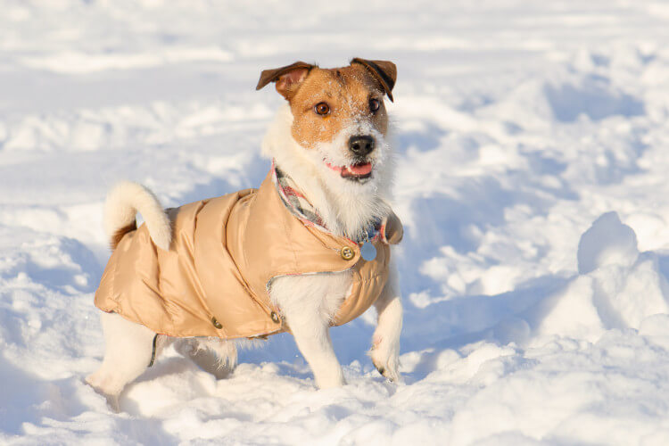 Donate coats to dogs homes