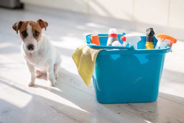 Donate cleaning supplies to dogs homes