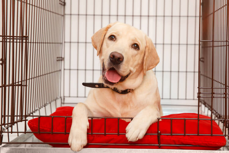 Donate crates to dogs homes