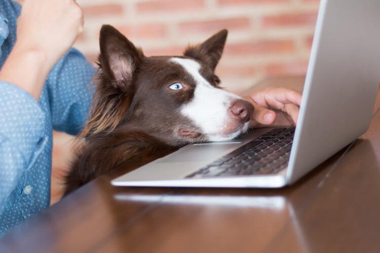 Donate to dogs homes via Amazon Wish Lists