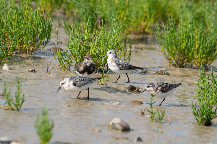 Birds at Rye Harbour Nature Reserve