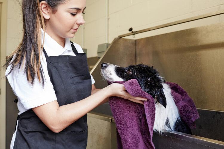 Battersea Dogs Home