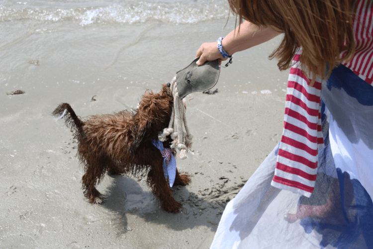 Dog toys from Harbour Hounds