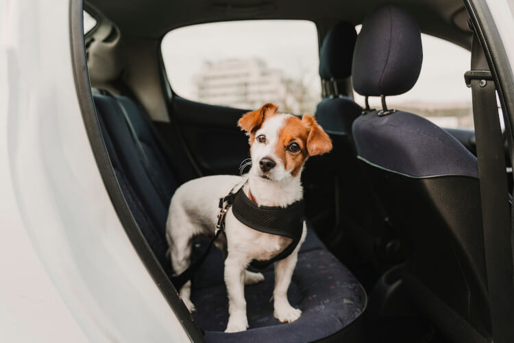 Restrain your dog when driving